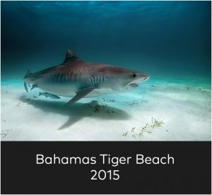 Bahamas Tiger Beach 2015