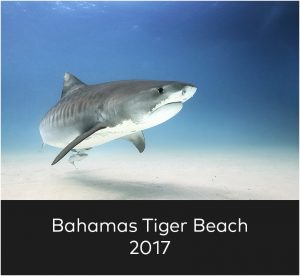 Bahamas Tigerbeach 2017