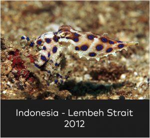 Indonesia Lembeh Strait 2012