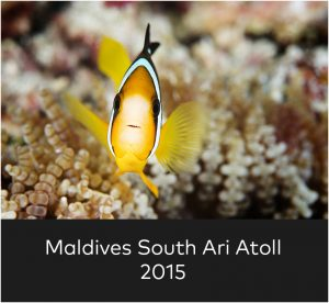 Maldives South Ari Atoll 2015