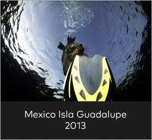 Mexico Isla Guadalupe 2013