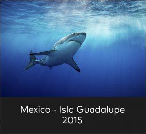 Mexico Isla Guadalupe 2015