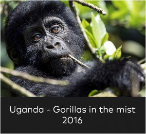 Uganda Gorillas in the mist